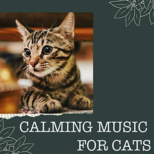 Calming Music for Cats, Music for Cats Project & Music for Cats Peace