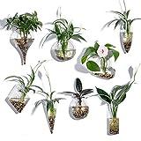 KnikGlass Lot de 8 Mural Vase Suspendus Montage Mural Jardinière Succulente Géométriques en Verre Air Plant Terrariums Fleur Pot Jardin Maison Mariage