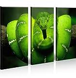 islandburner Bild Bilder auf Leinwand Grüne Mamba Gift