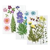 XGzhsa Flores prensadas secas, juego de flores secas de bricolaje, 42 piezas de flores secas naturales naturales mezcladas para manualidades de resina de bricolaje, maquillaje facial para uñas