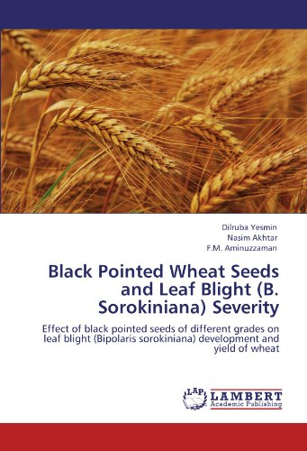 Black Pointed Wheat Seeds and Leaf Blight (B. Sorokiniana) Severity: Effect of black pointed seeds of different grades on leaf blight (Bipolaris sorokiniana) development and yield of wheat