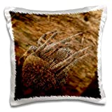 3dRose Stamp City - insects - Macro photograph of a sleepy, fuzzy orb weaver spider. - 16x16 inch Pillow Case (pc_325111_1)