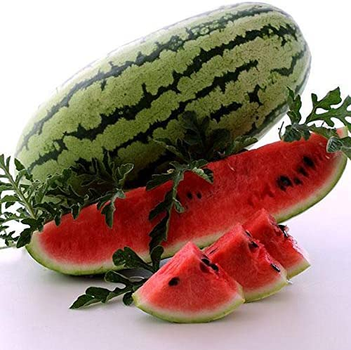 Georgia Rattlesnake Watermelon Seeds 1 OZ Bulk 225 Seeds Heirloom Open Pollinated Non GMO Heirloom product image