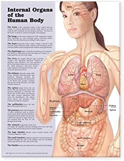 Internal Organs Of The Human Body Chart: (Laminated)