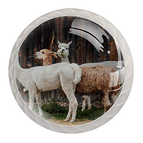 4 pomos redondos para puerta de gabinete, con tornillo, para cocina, baño, dormitorio, cajón, alpaca, cabañas de alquiler vacacional, piel de lana