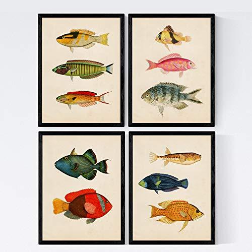 Nacnic Set di 4 Stampe artistiche Sfondo Vintage rappresentazione di Pesci. Immagini ittiche. Pesci del mediterraneo. Mare e oceani. Immagini Stampate su Carta da 250 Grammi di Alta qualità