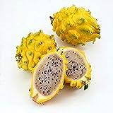 Shopvise pitaya amarilla Frutas Semillas 100 piezas