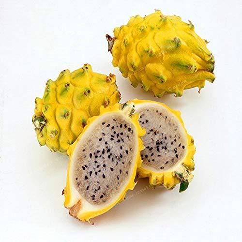 Shopvise jaune Pitaya fruits Graines 100Pcs