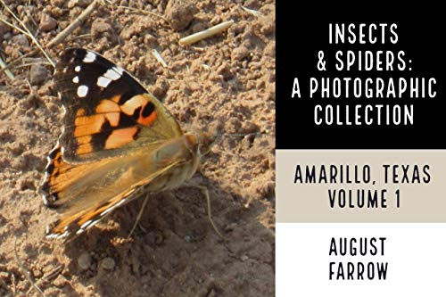 Insects & Arachnids: A Photographic Collection: Amarillo, Texas: United States - Volume 1 (Wildlife: Amarillo, Texas) (English Edition)