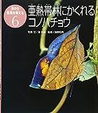 亜熱帯林にかくれるコノハチョウ(虫から環境を考える)