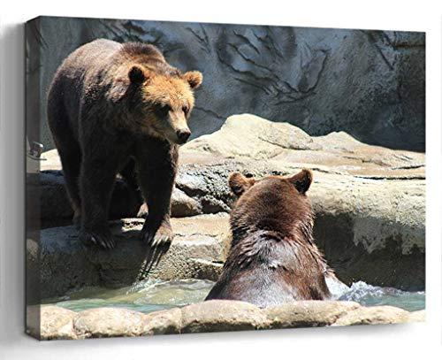 Wall Art Canvas Print Photo Artwork Home Decor (24x16 inches)- Brown Bears Bears Exhibit Zoo Wild Bear Brow