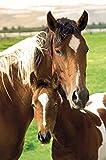 Pferde - Stute und Fohlen - Poster Pferde-Mutter mit Fohlen