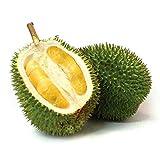 La livraison prend généralement entre 1 et 4 semaines après l'envoi de l'article. Veuillez vérifier le délai de livraison avant de faire vos achats. Nouvelle arrivée 10pcs Durian Seeds roi de fruits à haute nutrition Rare maison vrai MINI Outdoor Arb...