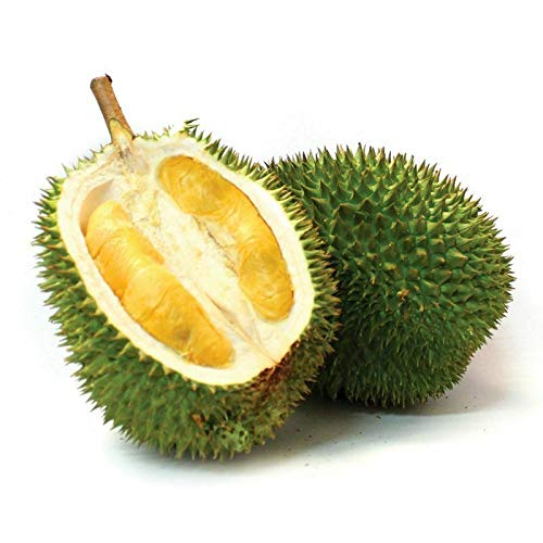 Nouvelle arrivée 10pcs Durian Seeds roi de fruits à haute nutrition Rare maison vrai MINI Outdoor Arbre Graine Germ plantation drôle Bonsai