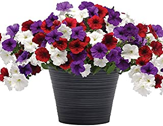 Petunia Combo - PLUG & PLAY Flying The Flag F1 - Petunia Flower Seeds Combo Collection - 75 Seeds