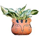 Bcaer Decoración de regalo creativo Suculenta maceta de cerámica, bandeja suculenta, cactus, flor, contenedor de planta perforada, maceta cilíndrica, para mesa, hogar, decoración de interiores
