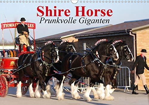 Shire Horse ? Prunkvolle Giganten (Wandkalender 2020 DIN A3 quer)