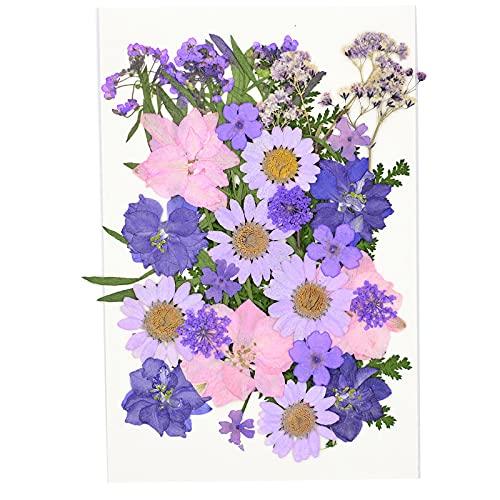 LiuliuBull Gedroogde geperste bloemen, gedroogde bloem voor hars mallen, kleurrijke geperste bloemen voor hars sieraden, DIY telefoon hoesjes, gezicht make-up, nail art en wenskaart (kleur: U 31)