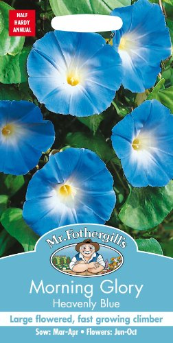 Mr Fothergills???Flux des paquets???Fleur???Morning Glory Heavenly Bleu???45?graines