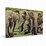 CALVENDO Lienzo Premium de 120 cm x 80 cm, Horizontal, un Motivo del Calendario de Elefantes Wildlife en Kenia, Imagen sobre Bastidor, Imagen preinstalada y Impresionante Animal Animales