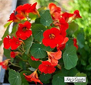 Nasturtium Empress of India Flower Seeds, 50+ Premium Heirloom Seeds!, Gardeners Choice, Great for Hanging Baskets! (Isla's Garden Seeds), 90% Germination Rate, Highest Quality Seeds