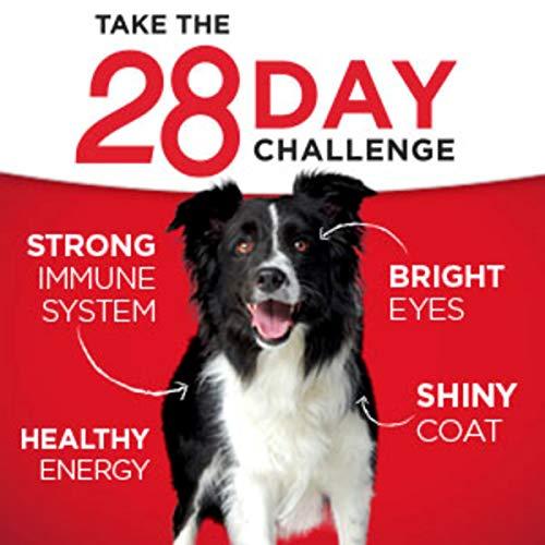 Purina ONE SmartBlend Vibrant Maturity Dog Food