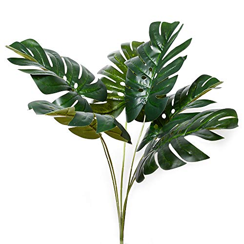 Planta Monstera  marca Antspirit