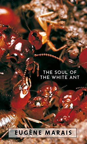 The Soul of the White Ant (English Edition)