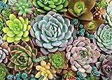 Succulent Garden 1000 Piece Jigsaw Puzzle