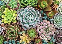 Succulent Garden Jigsaw Puzzle: 1,000 Pieces