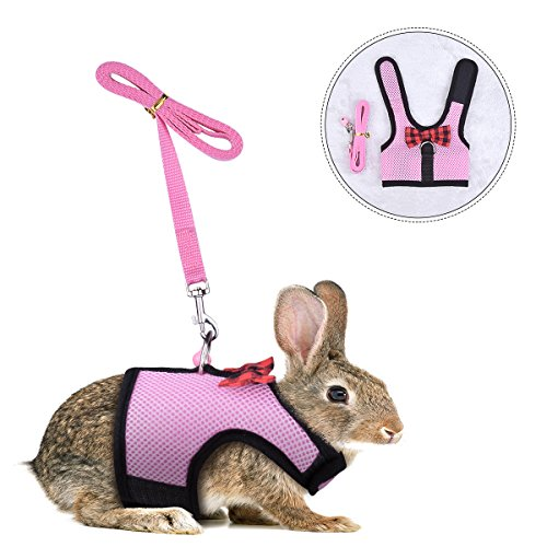 Rabbit Kitten Harness