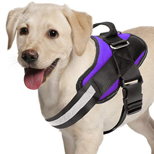 Joyride Harnesses for Dogs