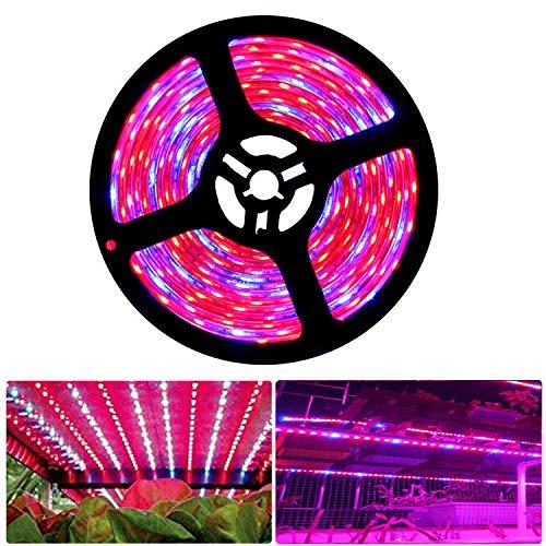 Tesfish LED Pflanzen wachsen Streifen Licht DC 12V IP65 Vollspektrum SMD 5050 rot blau 8: 1 Seil Licht für Aquarium Gewächshäuser Pflanze