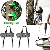 sanguiner Tree Climbing Spikes Teeth Claws Crampons for Hunting Observation, Picking Fruit, Coconut, Simple to Use. -