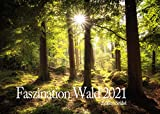 Edition Seidel Faszination Wald Premium Kalender 2021 DIN A3 Wandkalender Natur