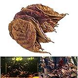 PiniceCore 10pcs / Pack Terminalia Natural Catappa Hojas Foetida Isla Nueva Eficaz Almendra Hoja De Pescado De Limpieza/Tratamiento del Tanque del Acuario