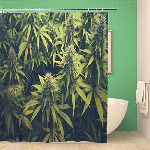 Awowee Decor Duschvorhang Grün Unkraut Cannabis Bud Marihuana Pflanzen Marihuana Sativa Hanf 180 x 180 cm Polyester Stoff Wasserdicht Badvorhänge Set mit Haken für Badezimmer