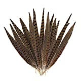 Outuxed 15pcs Natural Pheasant Feathers for Crafts Pheasant Tails 12-14inch(30-35cm) Party Decorations