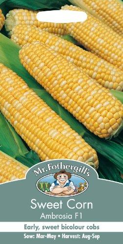 Mr Fothergills Pilzsporen, Gemüse Sweet Corn Ambrosia F1 35 Samen