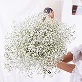 YIWOYI Flor seca natural Gypsophila flores frescas secas conservadas Gypsophila Paniculata Ramos de flores para bodas, fiestas, decoración del hogar (blanco, 15-30cm20g)