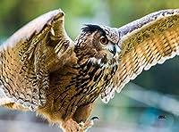Wild Flying Owl Kitchen Glass Cutting Board Barn Decorative Gift Bird Design [並行輸入品]