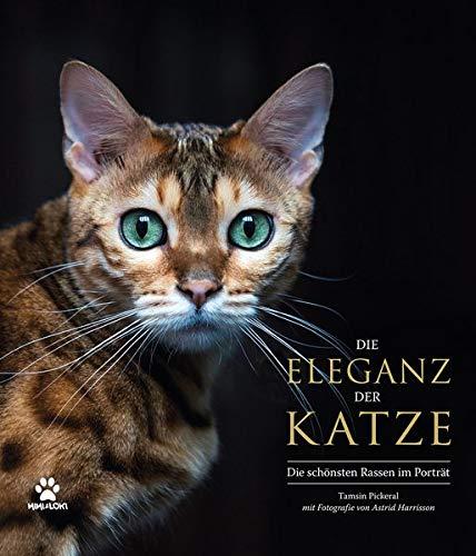 Die Eleganz der Katze: Die schönsten Rassen im Porträt