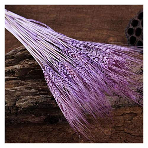 HETHYAN Dried Flowers-50Pcs/lot Natural Dried Flower Wheat Ears Bouquet For Wedding Party Decoration DIY Craft Home Decor Scrapbook Wheat Branch Props (Color : Taropurple)
