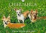Chihuahua - Kleine Hunde ganz groß (Wandkalender 2022 DIN A4 quer)