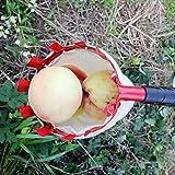 TriLance Tête de Ramasse-Fruits Portable en Métal pour récolter Les Fruits Pommes, Agrumes, Poires et Pêche etc 14cm, Cueillette de Fruits en Plein Air, Outil de Cueillette Facile (Multicolore)