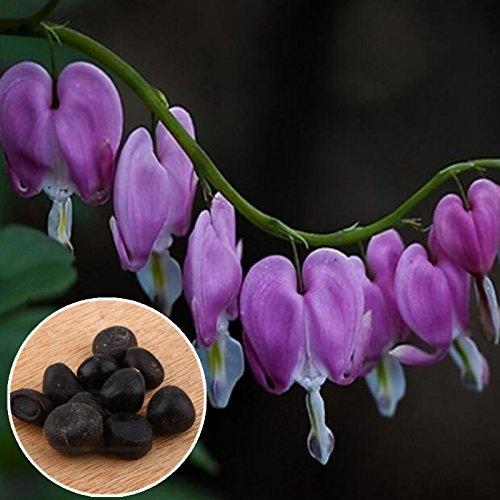 Auntwhale (10 Pcs) Purse Pivoine Seed Purple