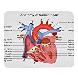 Wozukia The Heart Anatomy Mouse Pad Custom Medical Structure Organ Veins Cardiology Non-Slip Rubber Base Mousepad Rectangle Mouse Mat for Laptop Computer Wireless Mouse 9.5x7.9 Inch