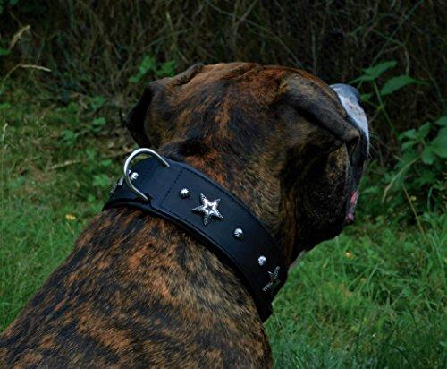 Star Leder Halsband Lederhalsband Breit Hunde Halsband Sterne u Nieten Schwarz unterlegt Tyson M L oder XL (XL)
