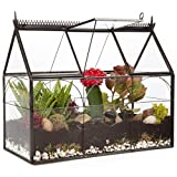 Deco Glass Geometric DIY Terrarium, Succulent & Air Plant - Hinged Greenhouse Shaped for Indoor Gardening Decor- Create Your own Flower, Fern, Moss Centerpiece- Amazing Holiday and Wedding Gift