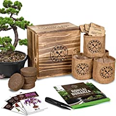 🌱 BONSAI TREE KIT - 4 types miniature bonsai tree seeds, 4 bonsai soil potting mix pods, 4 burlap bonsai pots or grow bags with sewn-in liners, 4 printed bamboo plant markers for bonsai plant name & Sowed-On Date, 1 bonsai tools, instructions, How-To...